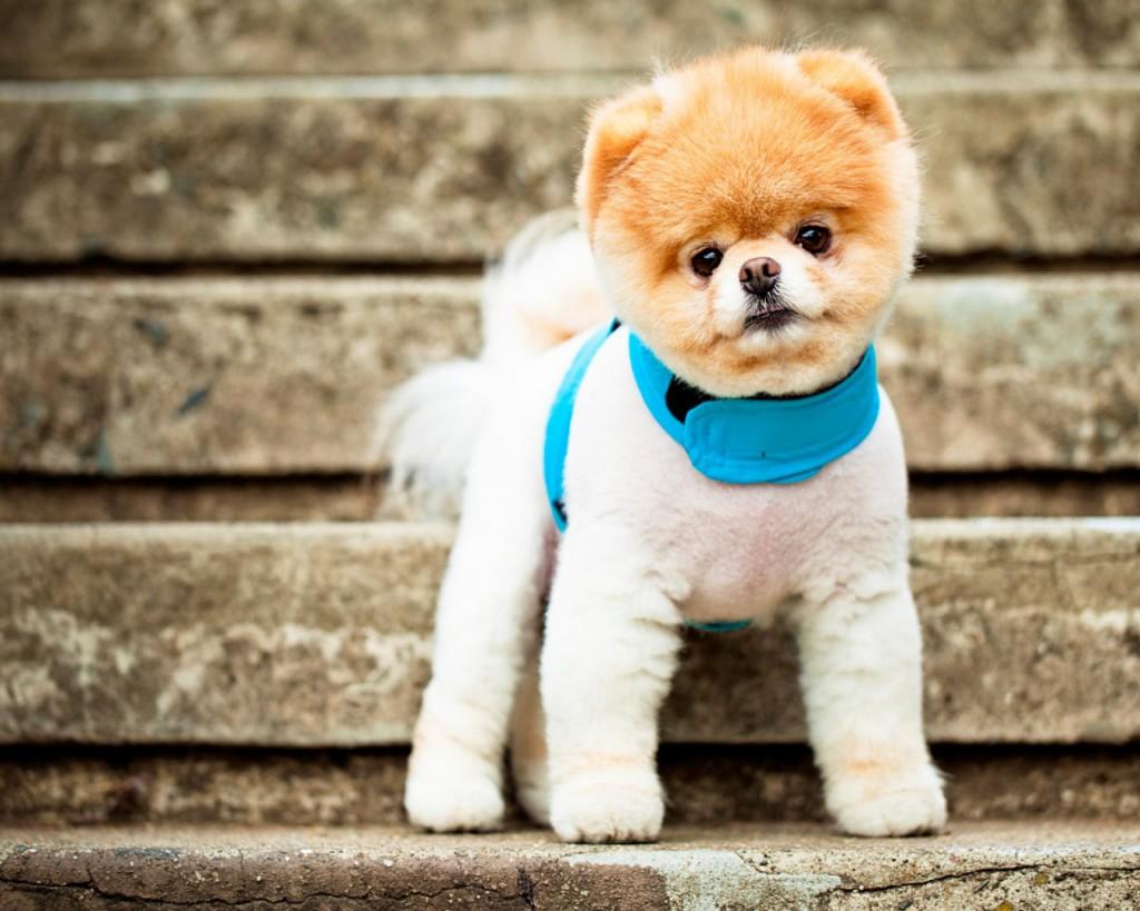 собаки 1024x819 Самая дорогая собака в мире. Элитные породы собак.