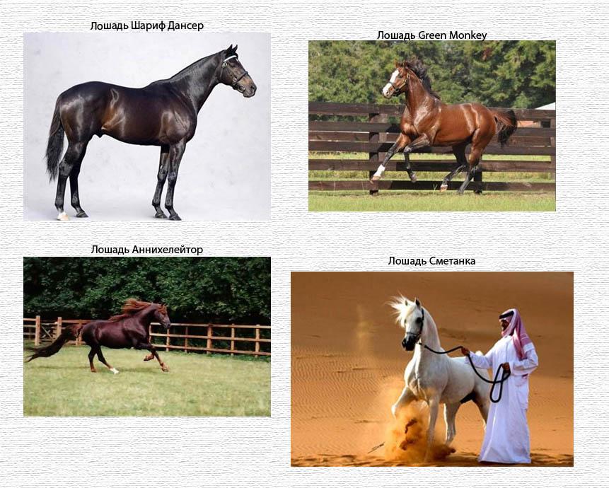 loshad Самые дорогие лошади в мире