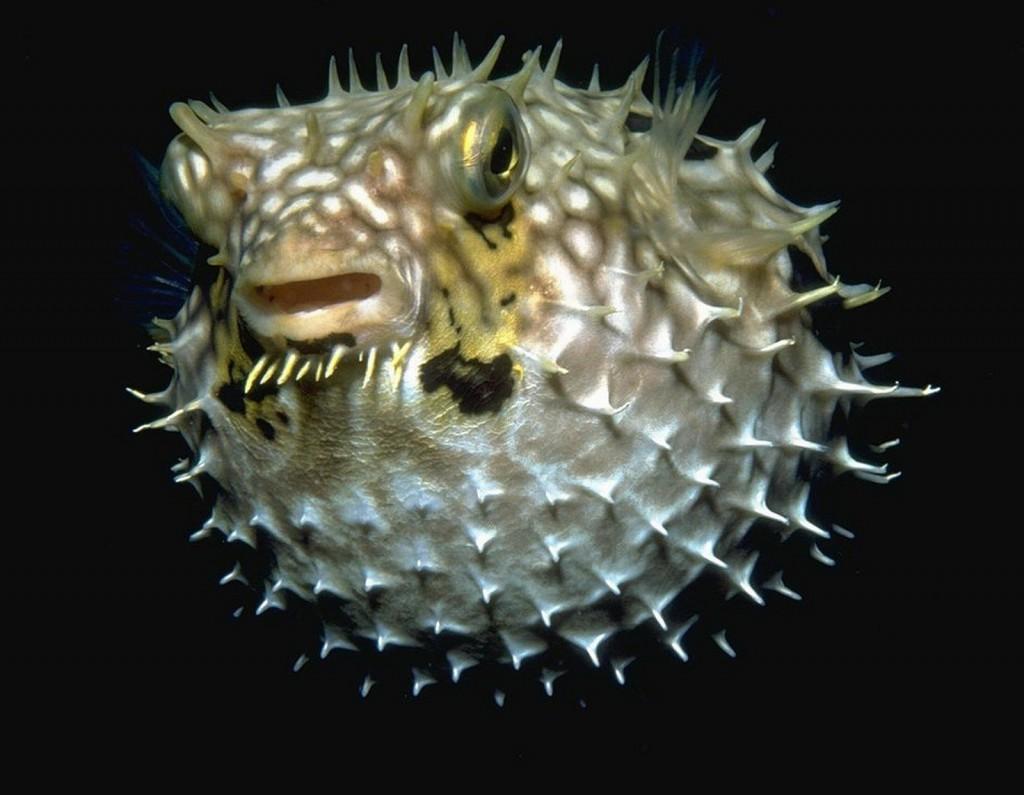 рыба 1024x795 Самые дорогостоящие рыбы мира